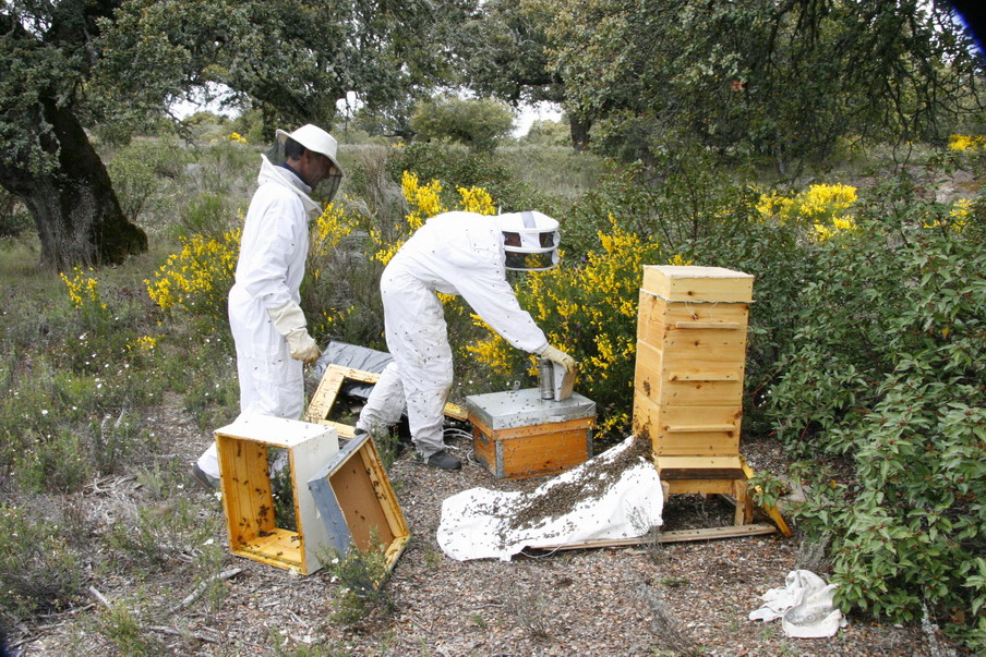 Flypiedrahita Blog » A year with Warre Beehives