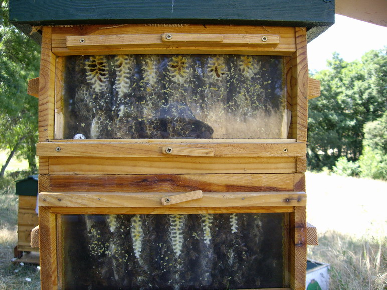 Super for beehive 7 Painted Wood FAVI